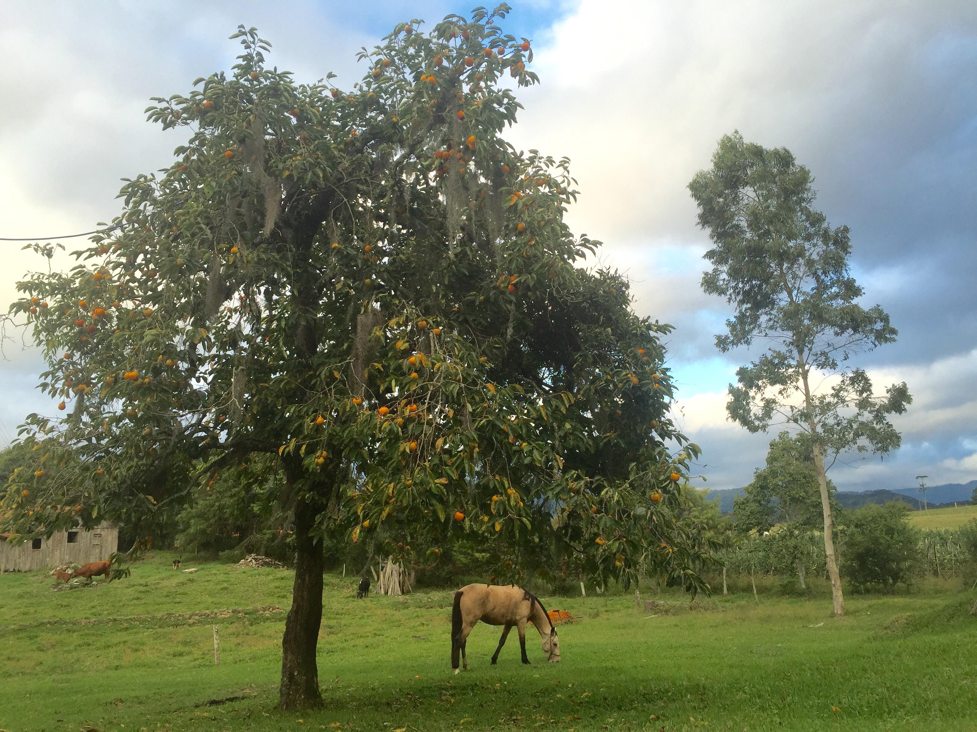 Der Süden Von Brasilien Behnischs Große Reise